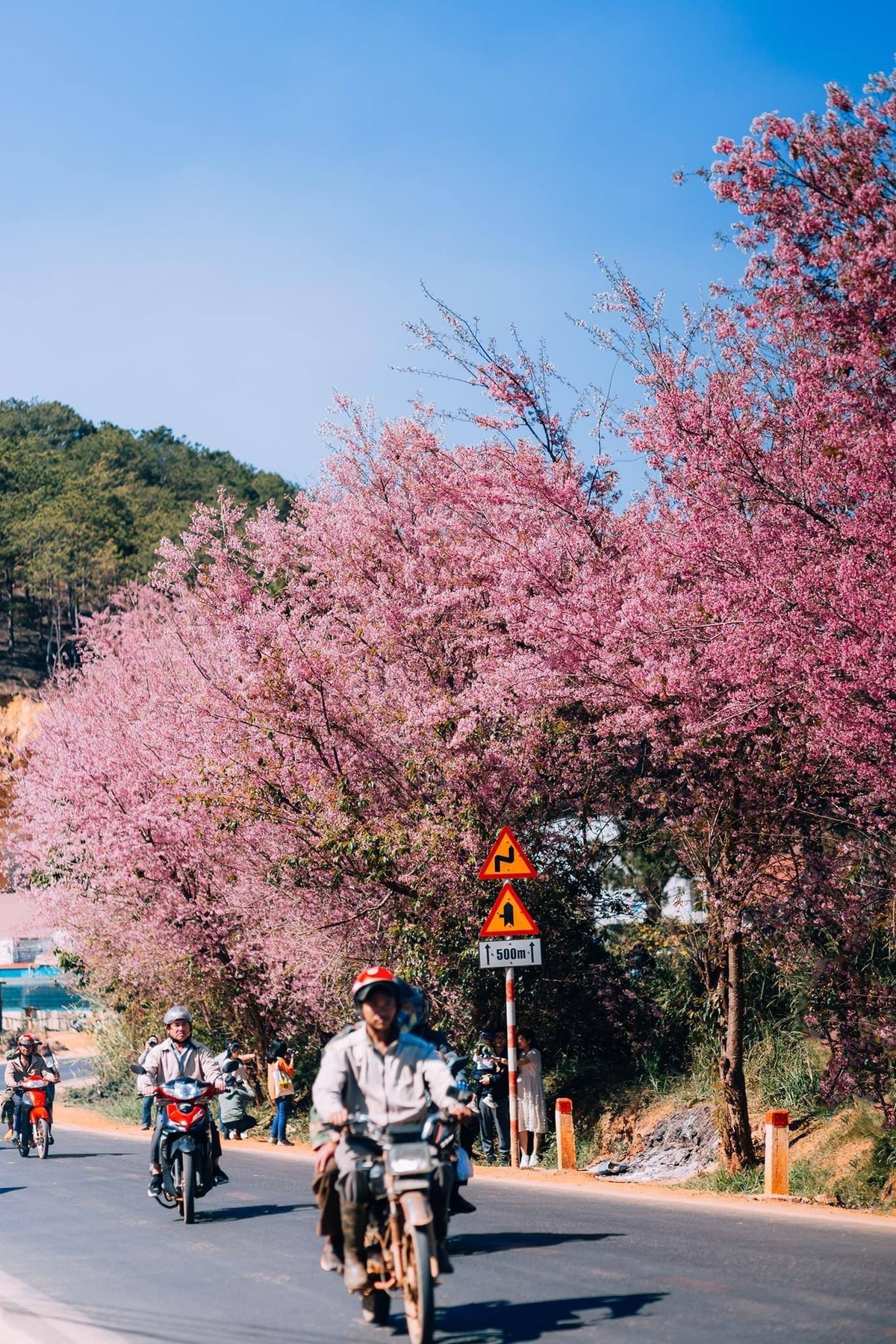 top ideal places to admire tet flowers in da lat