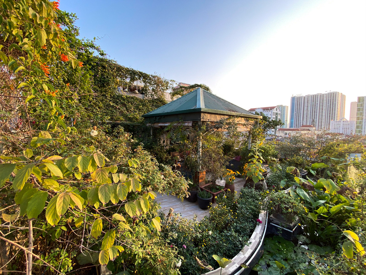 colorful flower field on terrace of hanoi woman