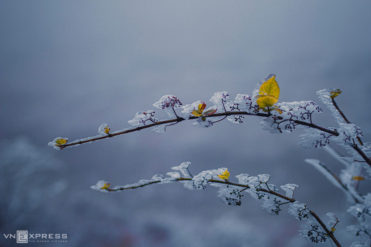 Northern Vietnam's mountainous provinces blanketed in frost and snow, video
