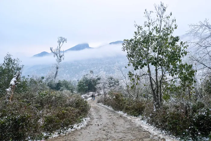 "Video: Tourists excited at snowy ""Europe-like"" scene in Vietnam Northern mountains"