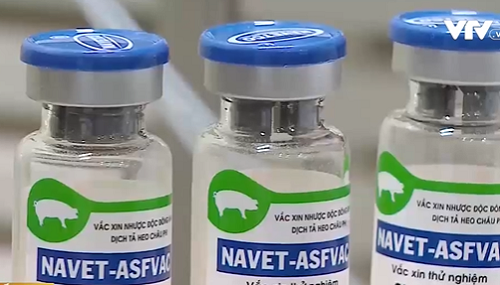 Vietnam to become the first country successfully producing African swine fever vaccine
