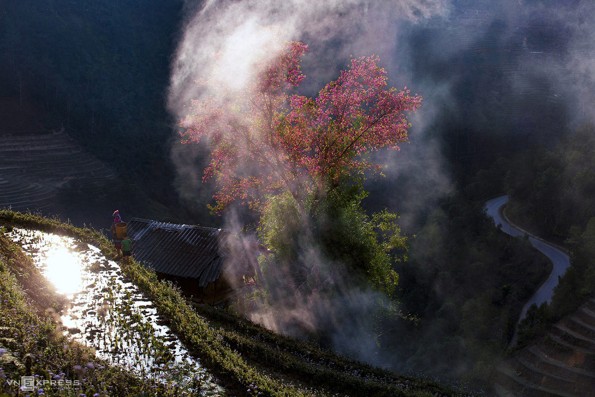 Spring colors in Vietnam's northern highlands