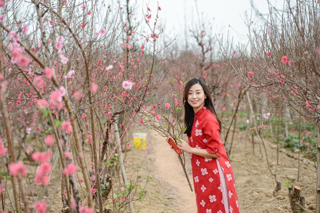 Gorgeous scene in Northern Vietnam's largest peach blossom- growing hub