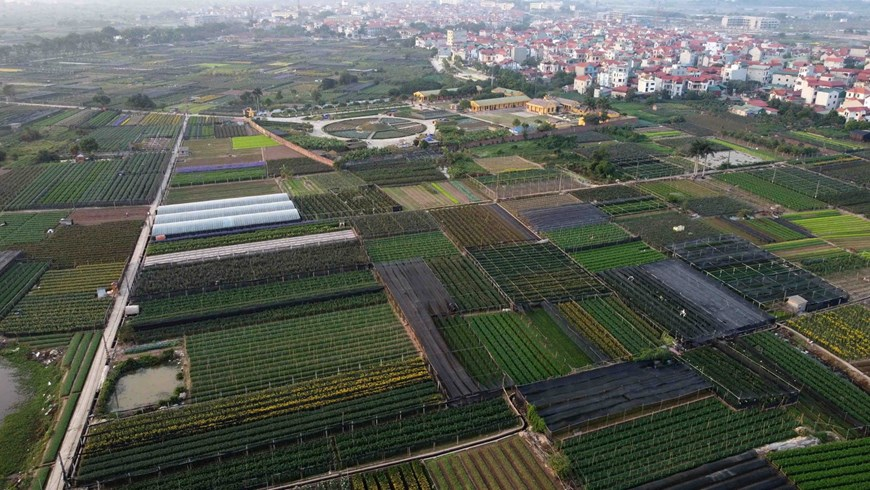 Picturesque scene at Vietnam's famous flower villages ahead of Tet