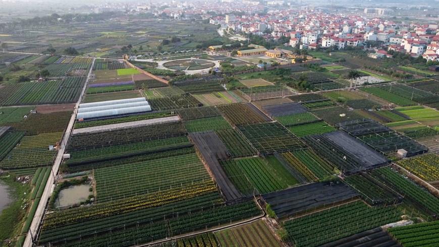 picturesque scene at vietnams famous flower villages ahead of tet