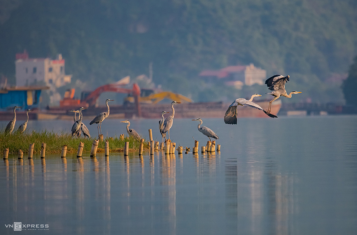 The world's largest pagoda in Vietnam, a sanctuary of birds