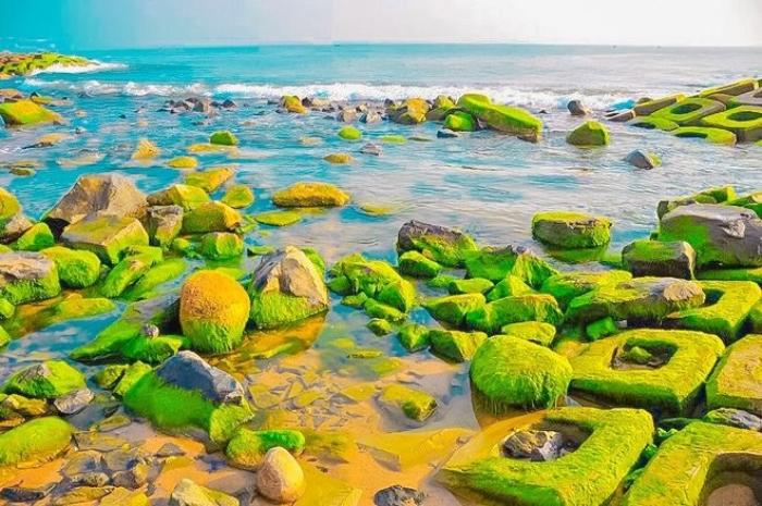 Cinematic beauty of green mossy rocky ground in Phu Yen
