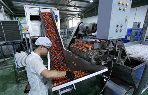 Vietnam aims $10 bln in fruit, vegetable export value by 2030