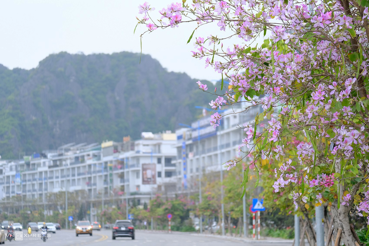 The charming beauty of Ha Long City through lens of photography passion