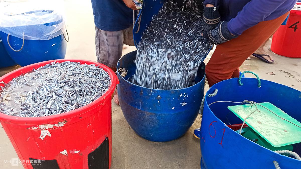 Vibrant scene at fish market in Quang Nam province