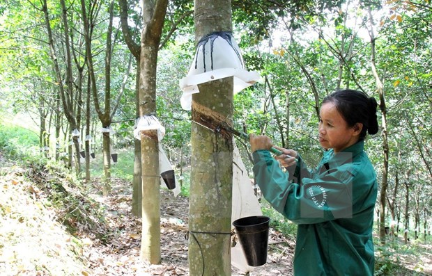 Vietnam's rubber exports enjoy surge in first four months of 2021