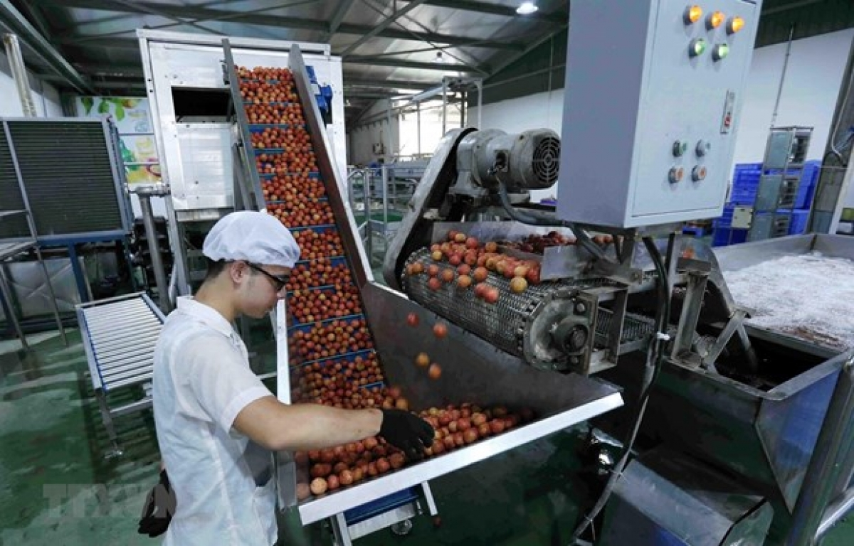 Vietnam's fruit and vegetable exports skyrocket in first four months of 2021