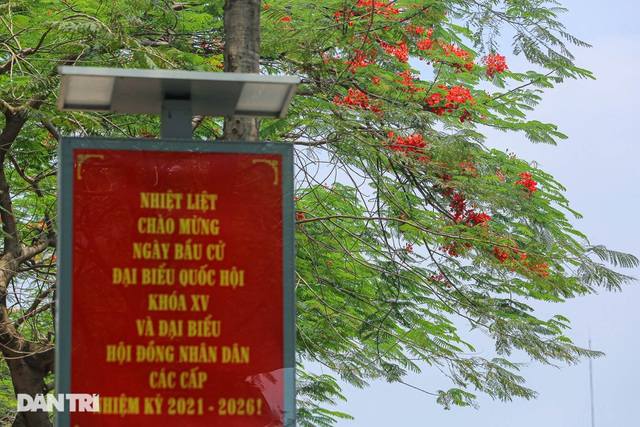 In Photos: Hanoi streets tinted in red of flamboyant flowers