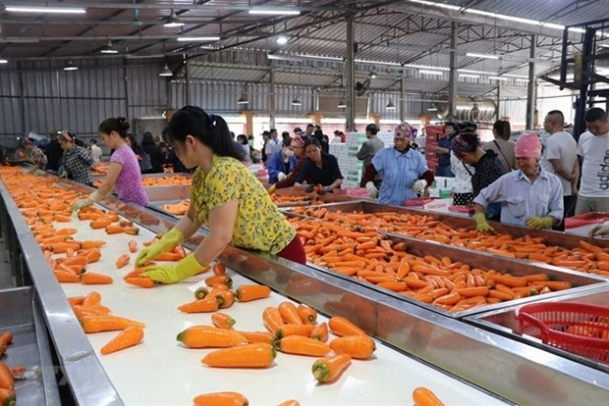 Poland market offers ample room for Vietnamese farm produce and food