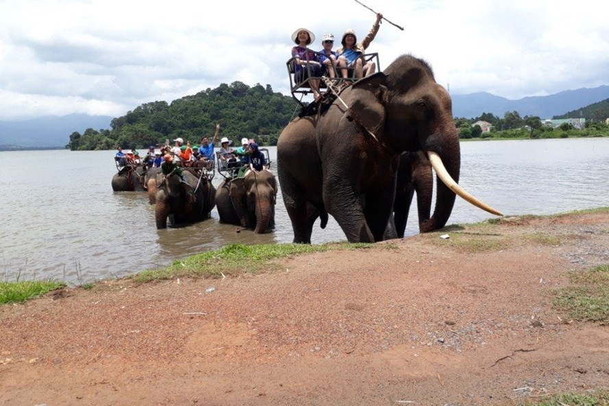 Elephant riding tours in Vietnam are called for the removal by conservationists
