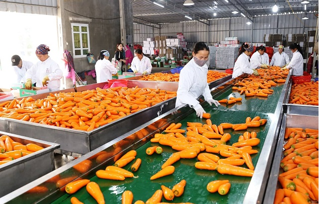 Bright prospects for Vietnam's fruit, vegetable exports to major markets