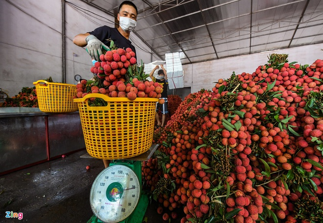 China pledges to create favorable conditions for Bac Giang lychees consumption