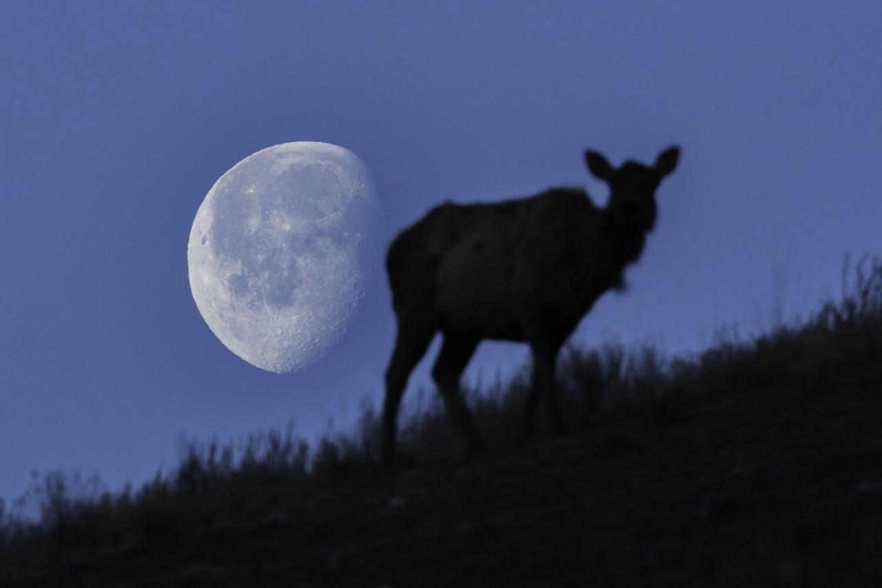 magical full buck moon will brighten us independence day sky