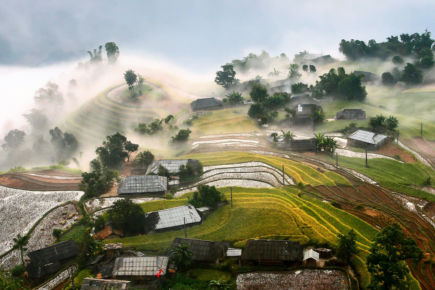 Captivating scenes of Hoang Su Phi ripening terraced fields