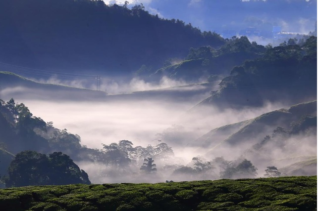 long coc tea hill in dawn mist a real life fairyland