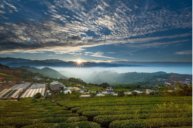 "Long Coc tea hill in dawn mist, a real-life ""fairyland"""