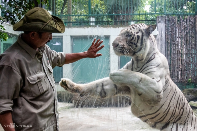Vietnam's oldest zoo incurs $US 861,000 in loss due to Covid-19, calling for donation