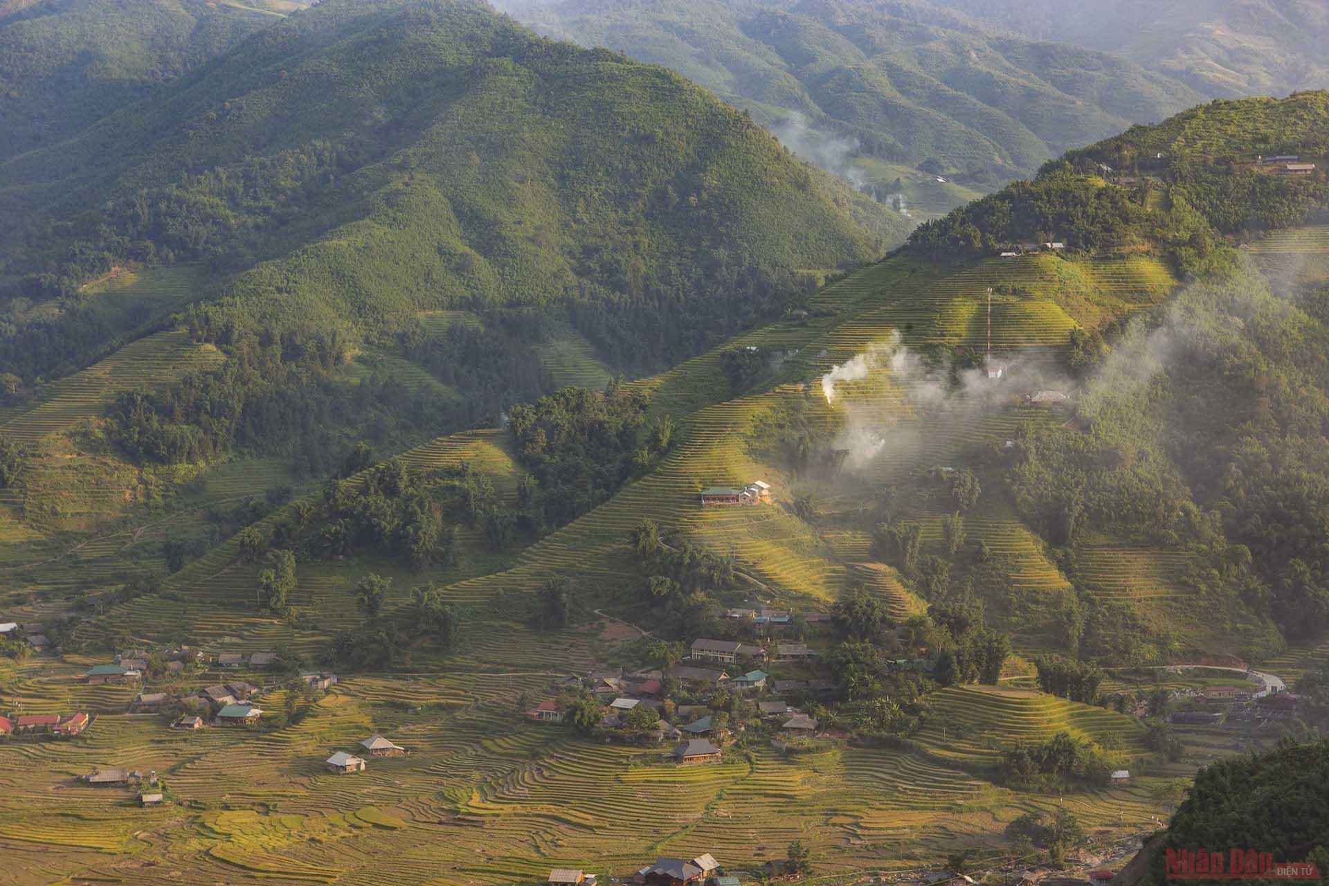 poetic golden rice season in muong hoa valley
