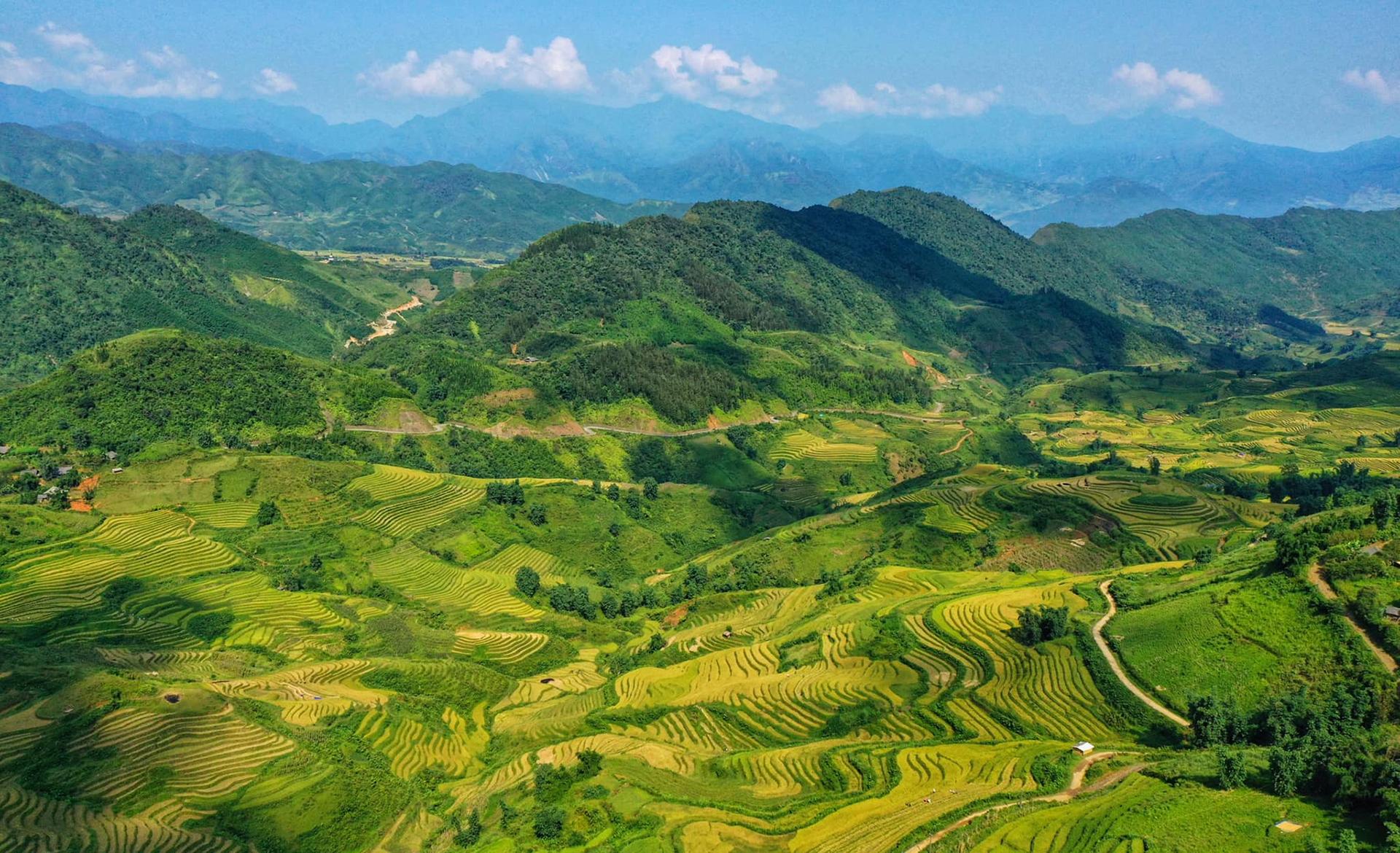 ripening rice season adorns beauty of northern vietnam