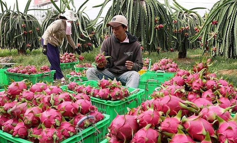 vietnams fruit exports to china decline but surges to thailand