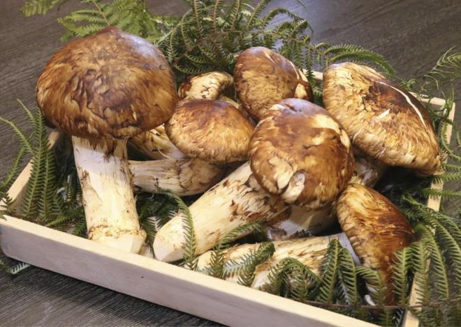 precious prohibitively priced mushrooms hunted by wealthy vietnamese