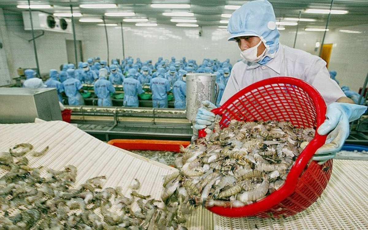 vietnamese shrimp exports to eu expected surge in remaining months of 2020 thanks evfta