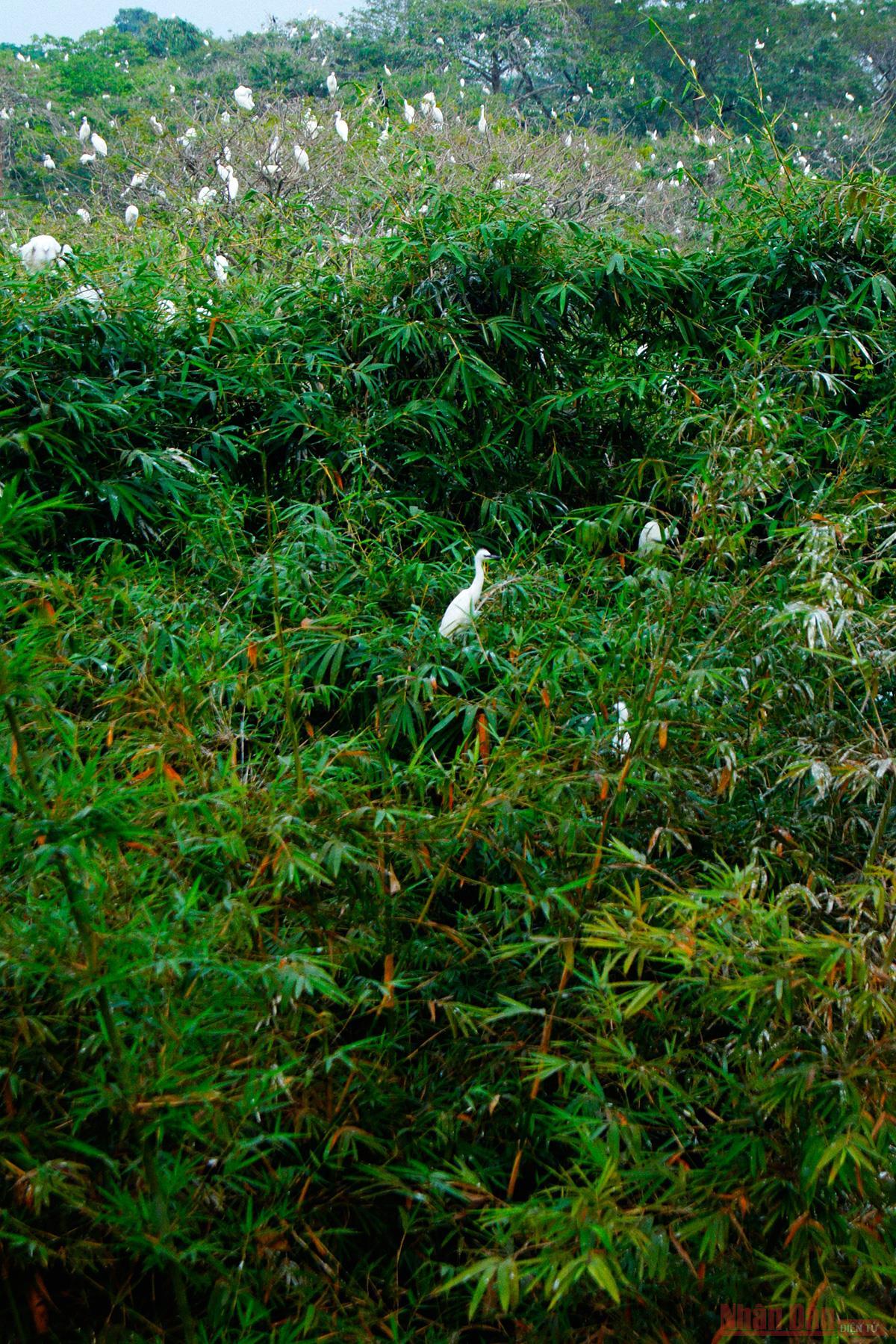 Bang Lang Stork Garden, the largest bird sanctuary in Vietnam's Mekong Delta