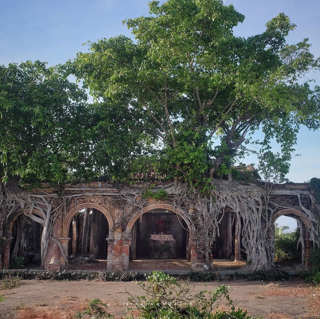 unique centenarian communal house embraced by bodhi tree roots in vietnams mekong delta