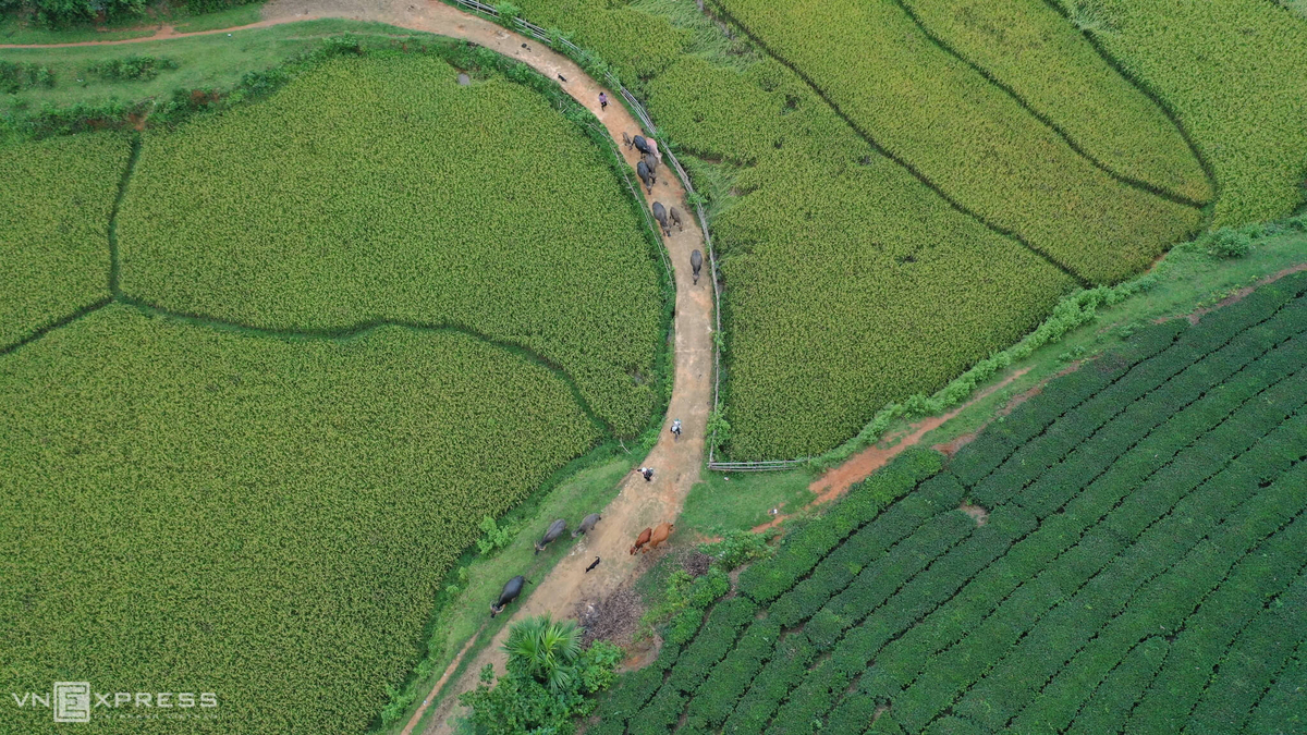 Long Coc, the most beautiful tea hill in Vietnam's northern