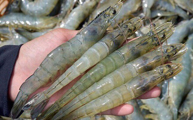 vietnam surpasses thailand to become the largest shrimp supplier to canada