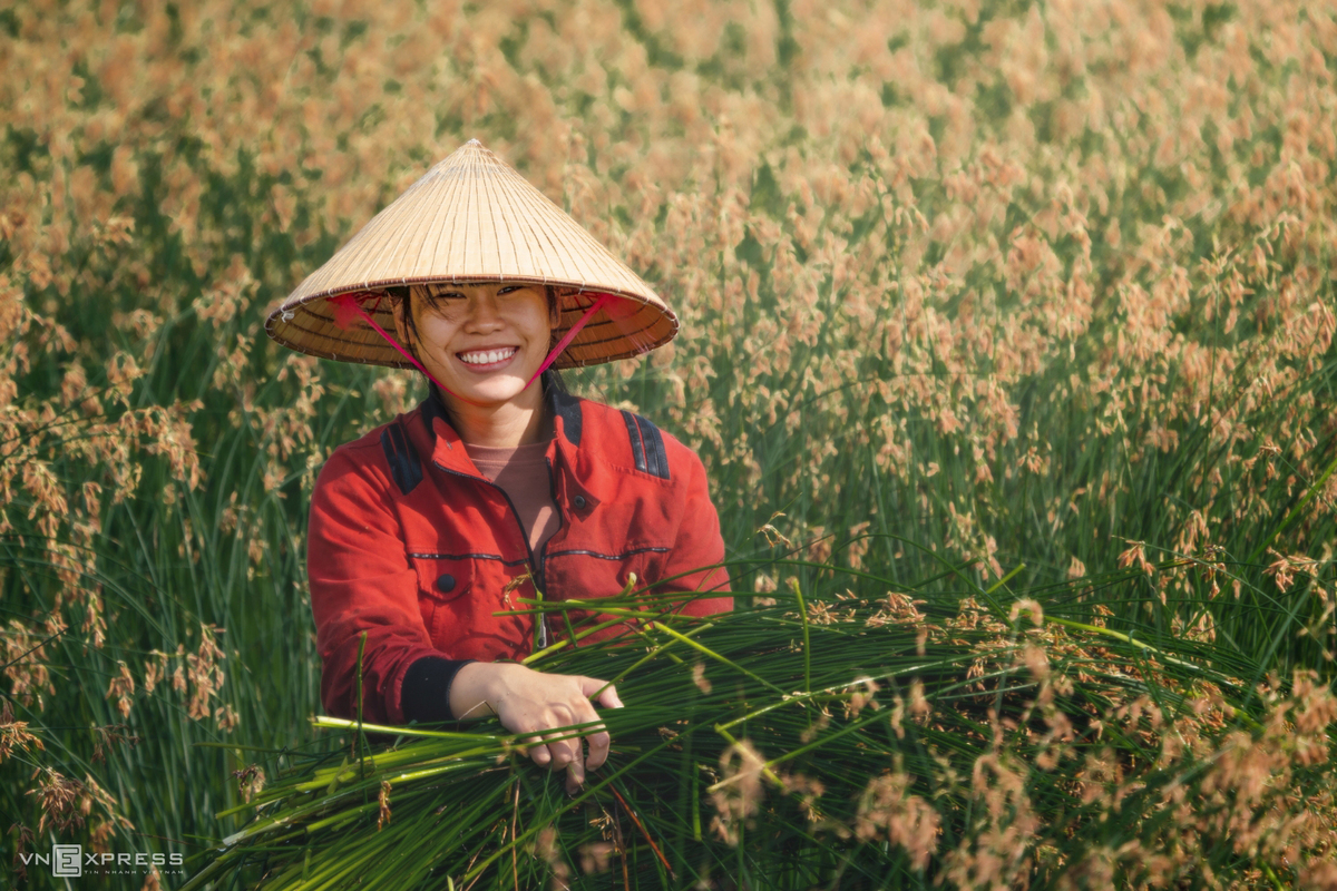 Vietnamese female beauties at work across the country in photos