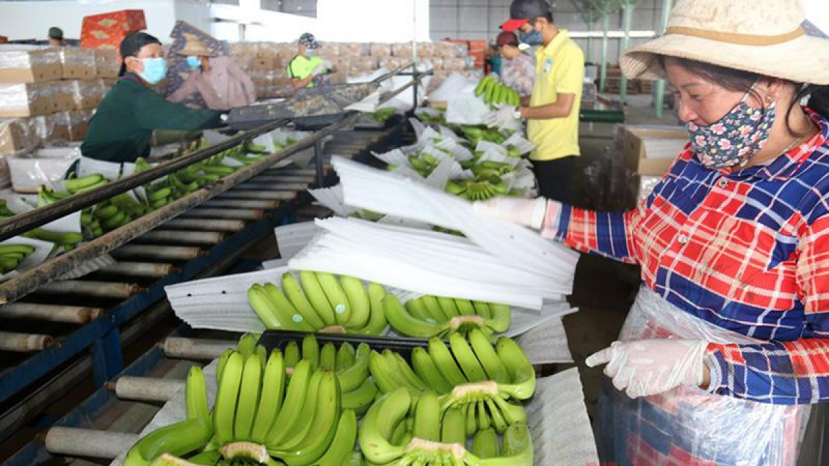 Vietnam – Laos import and export turnover starts to bounce back