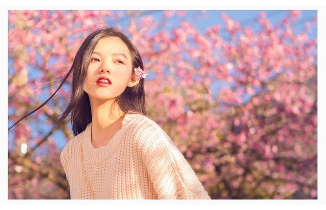 blooming cherry blossoms adds allure to beauty of sa pa