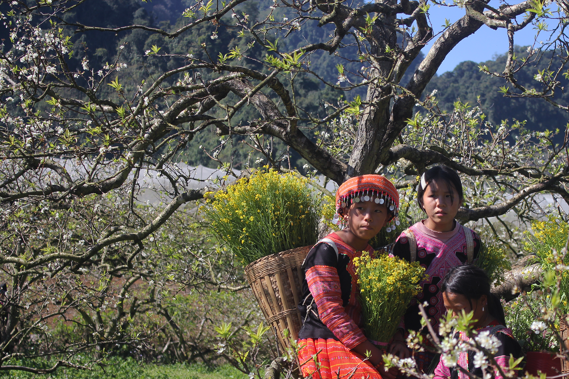 Recommended two-day itinerary to admire plum blossoms in Moc Chau