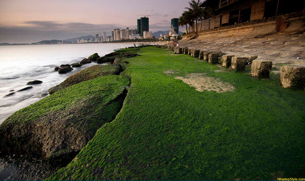 sea wall covered with forest green moss making a touristic scene in nha trang