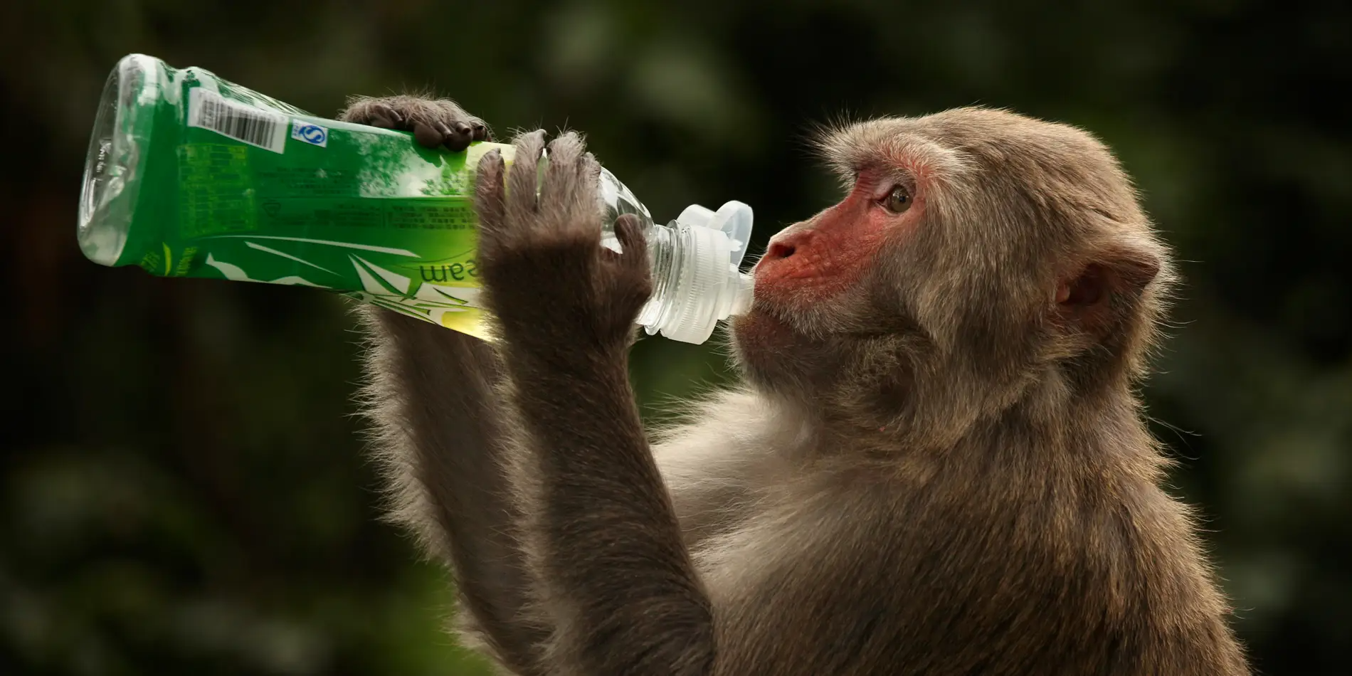 oxford developed vaccine appears to shield monkey from coronavirus