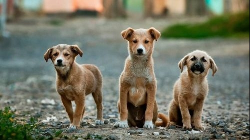 acpa calls on vietnam to ban dog and cat meat trade
