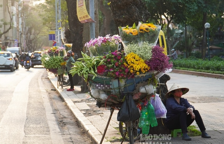hanoi turns romantic with lily flower blooming season