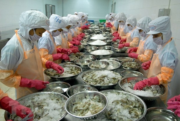 Shrimp processed for exports at Thong Thuan Company Limited in Ninh Thuan province (Photo: VNA)