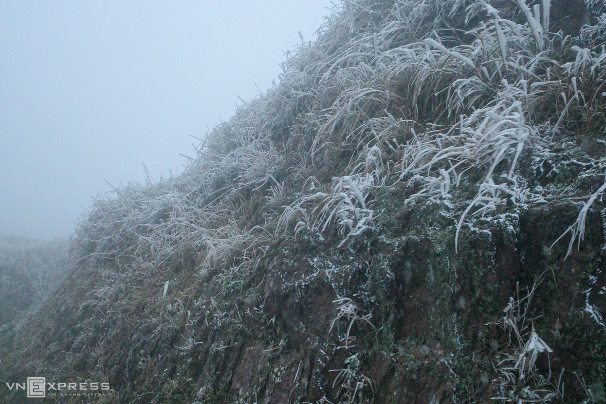 In Quang Ninh, frost appeared at the top of Dong pagoda, Yen Tu (Uong Bi city); landmark 1297 area bordering Binh Lieu district (Quang Ninh) and Dinh Lap district (Lang Son). At the top of Cao Ly mountain (Binh Lieu district), 1,000 m higher than sea level, ice is covered with trees and cliffs. (Photo: VNE)