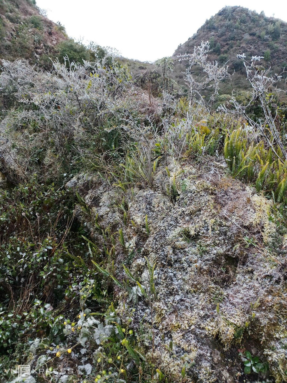 Ha Giang was frozen in Xin Cai commune, Meo Vac district and Dong Van district when the temperature dropped to one degree C.