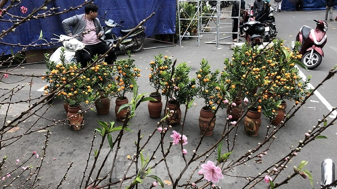 Bustling joys in Hanoi's oldest Tet flower market