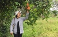 mayu inno japanese friend helps ben tre to implement organic agriculture model