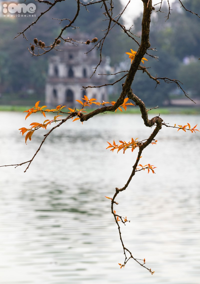 gorgeous hanoi in deciduous season