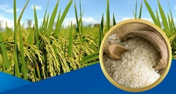 Vietnam suspends rice exports for food security